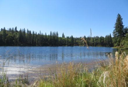 Pine Grove image